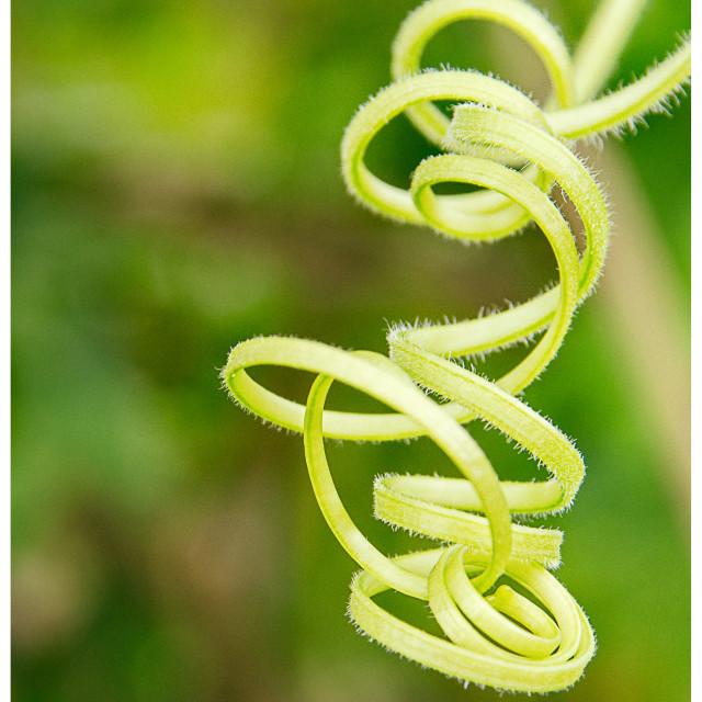"""Green spirals"" stock image"