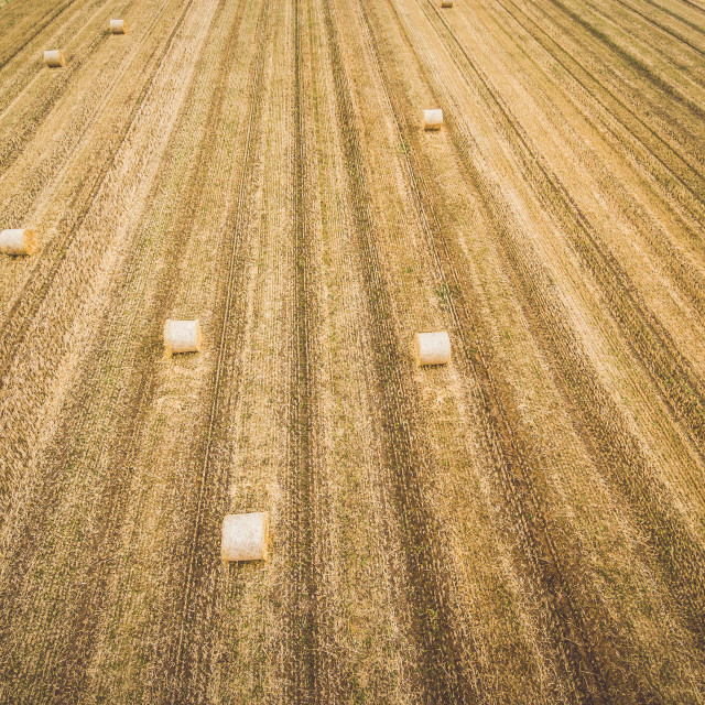 """Round hay bales on stubble"" stock image"