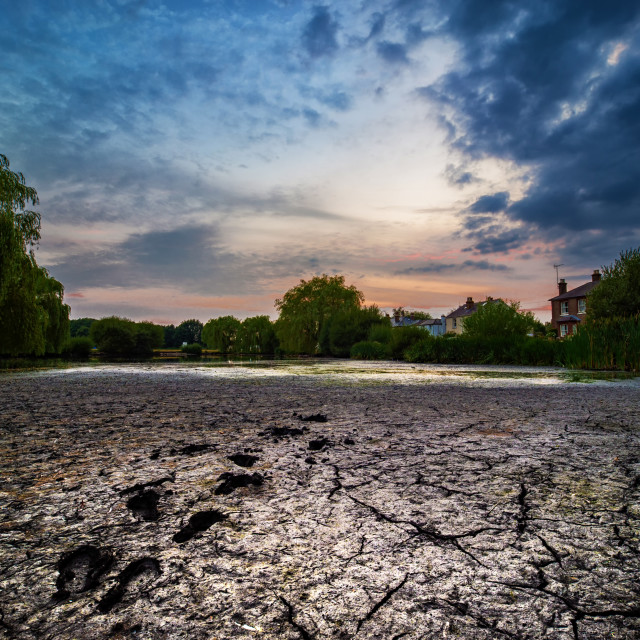 """Drying pond, West End Park, Esher, Surrey, UK"" stock image"