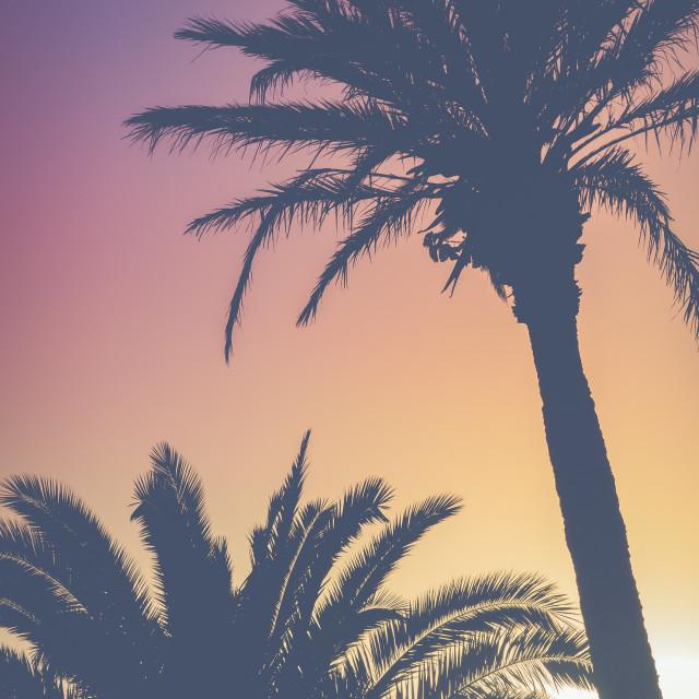 """Retro Vibrant Hawaii Palm Trees"" stock image"