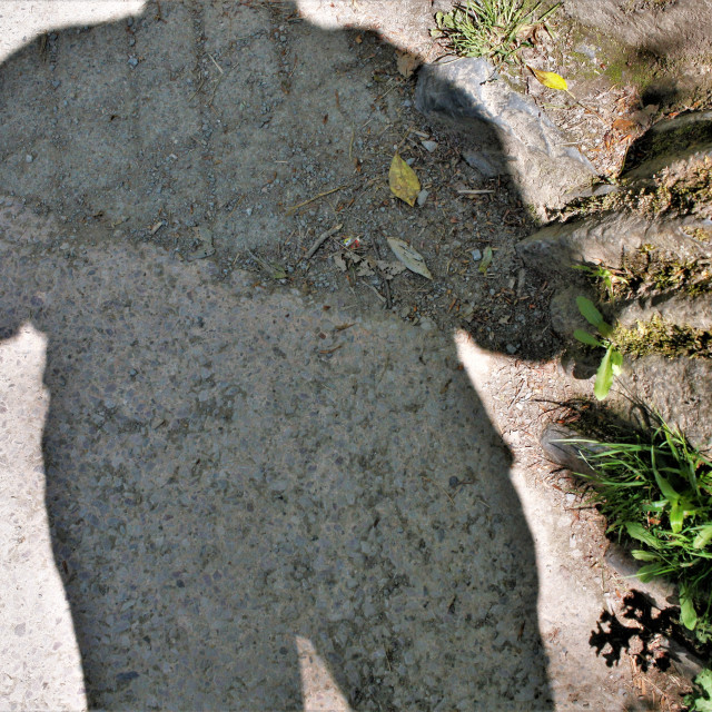 """Shadow of a person on concrete steps with leaves,mud and sand."" stock image"