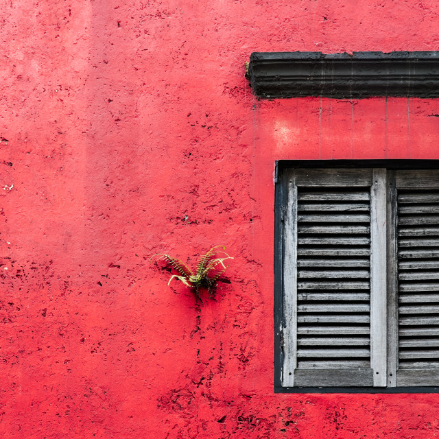 """Grungy Red Wall With Wooden Window"" stock image"