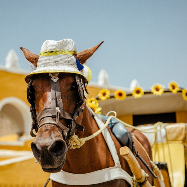 """A tourist horse and Carriage in Izamal in Mexico"" stock image"