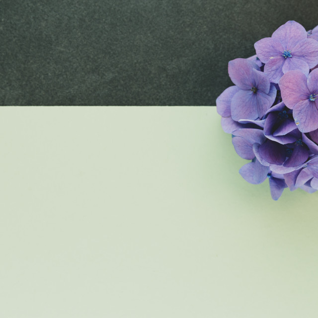 """""""hydrangea inflorescence floral concept backdrops"""" stock image"""
