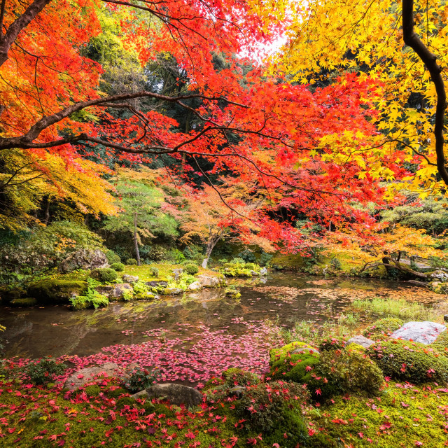 """Auumn garden at Nanzenji temple, Kyoto"" stock image"