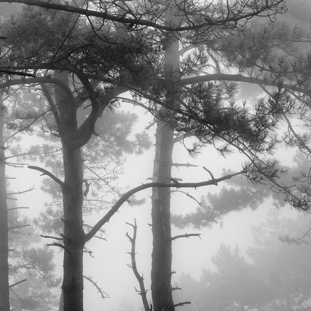 """Forest with fog"" stock image"