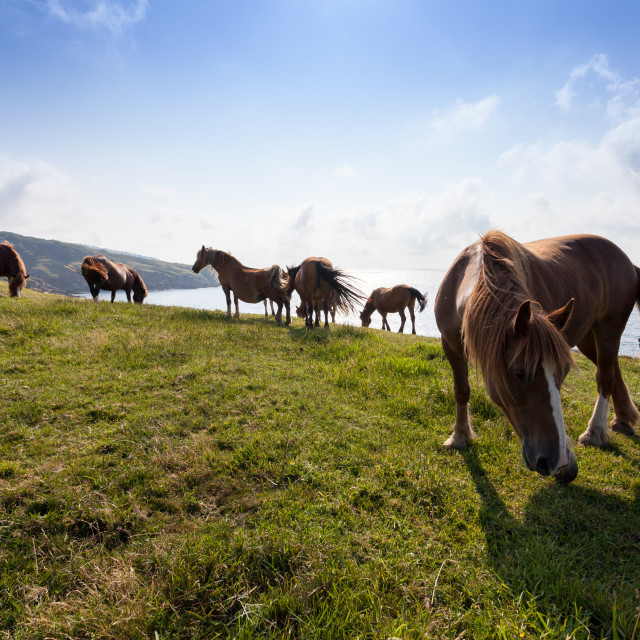 """Mares in the mountains"" stock image"