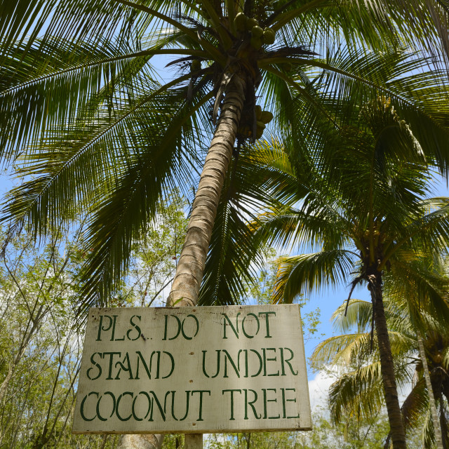 """Pls Do Not Stand Under Coconut Tree"" stock image"