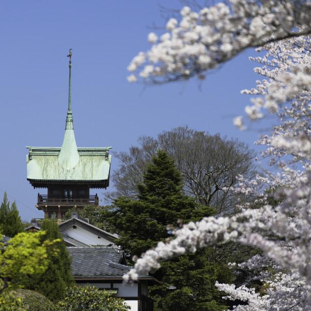 """Cherry blossom along lane of Southern Higashiyama and Daiunin temple, Kyoto,..."" stock image"