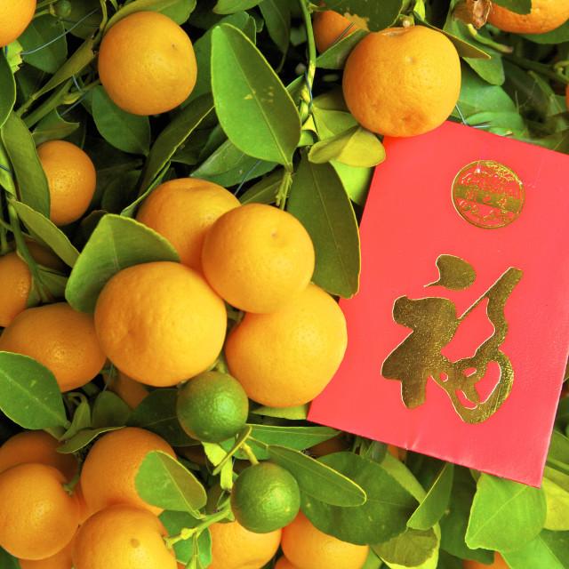 """""""Chinese New Year Kumquat Trees With Lai See Red Envelopes, Hong Kong, China,..."""" stock image"""