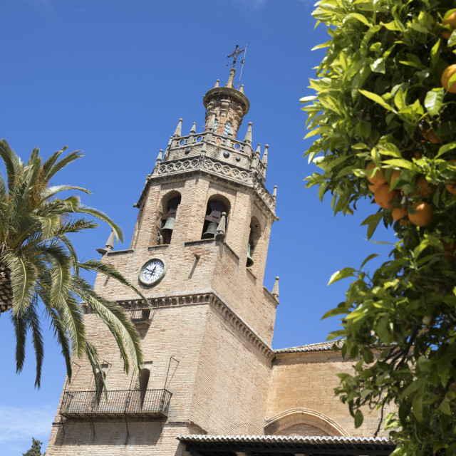 """Palm tree and tower of the Iglesia de Santa Maria la Mayor, Ronda, Andalucia,..."" stock image"