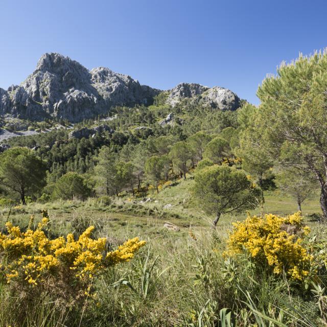 """Rugged mountain scenery in spring near Grazalema, Sierra de Grazalema Natural..."" stock image"