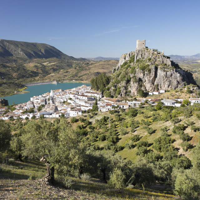 """Moorish castle above white village with olive groves, Zahara de la Sierra,..."" stock image"