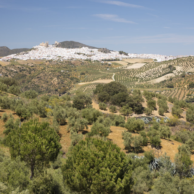 """""""Typical Andalucian landscape with olive groves and white town of Olvera,..."""" stock image"""