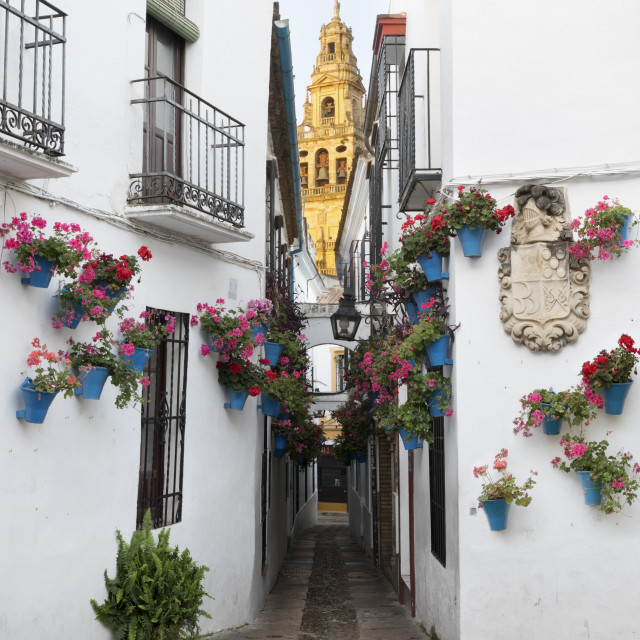 """Calleja de las Flores and the Mezquita, Cordoba, Andalucia, Spain, Europe"" stock image"