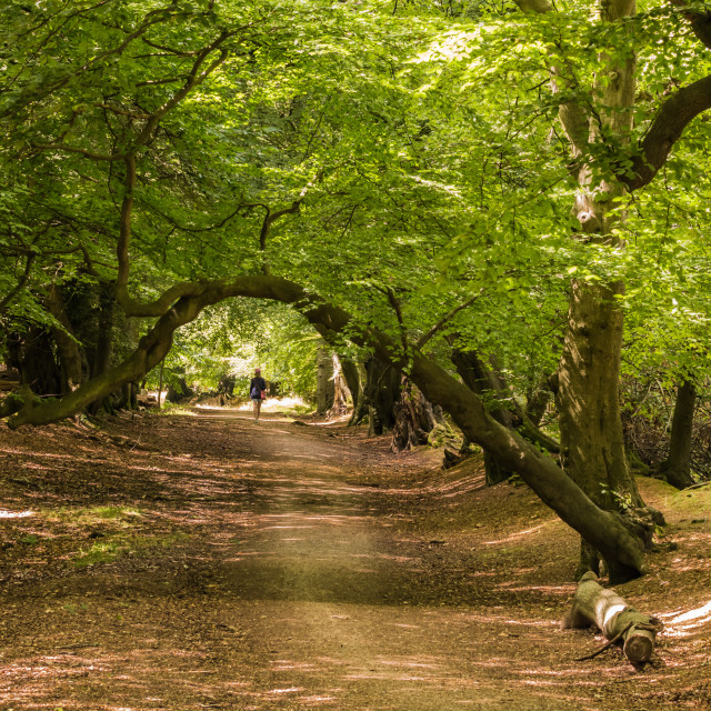 """UK - Walking in the Woods"" stock image"