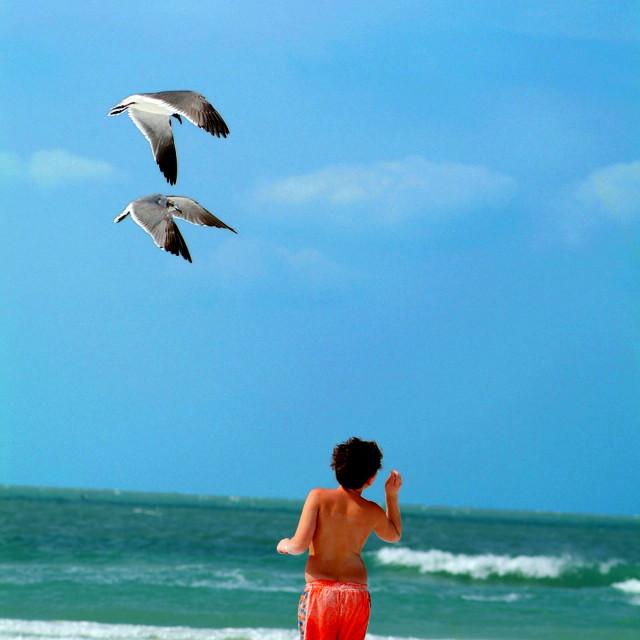 """Feeding The Seagulls"" stock image"