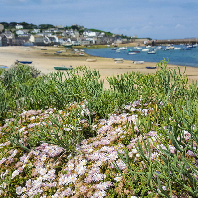 """Beach & flowers, St Mary's, Scillies"" stock image"