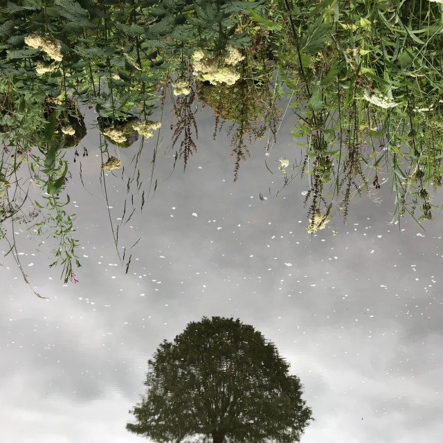 """Tree Reflected"" stock image"