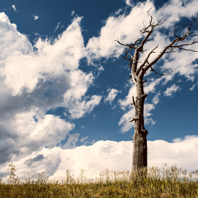 """""""Dead tree with cloudy skies in the background"""" stock image"""
