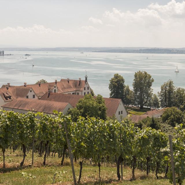 """Birnau with vineyard"" stock image"