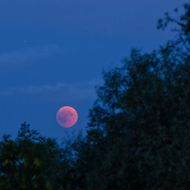 """Red Moon over the tree tops"" stock image"