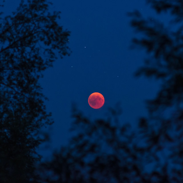 """Lunar eclipse beautifully framed by nature in darkness"" stock image"