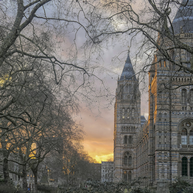 """""""Natural History Museum in London"""" stock image"""