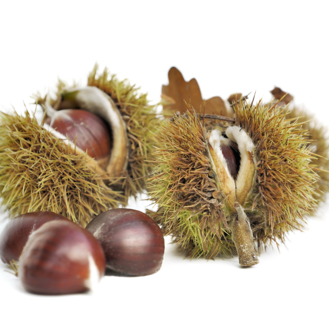 """""""sweet chestnuts isolated"""" stock image"""