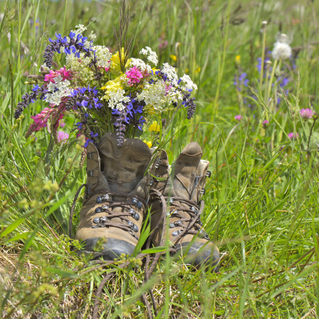 """""""hiker shoes with flowers"""" stock image"""