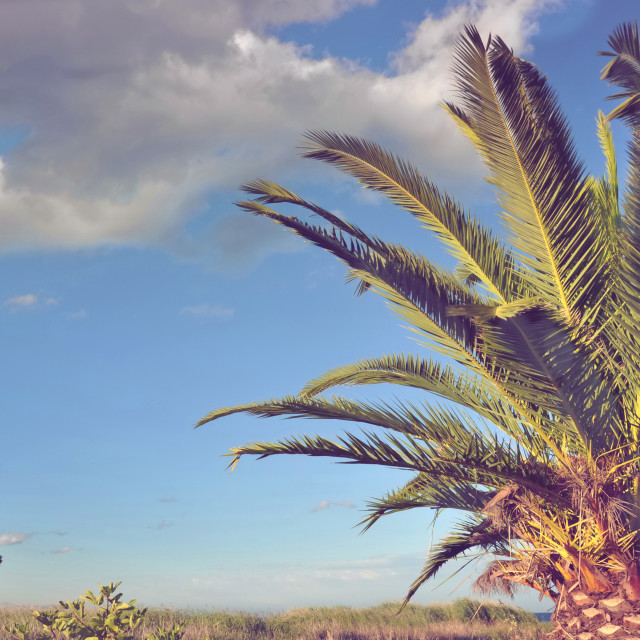 """foliage of a palm tree"" stock image"