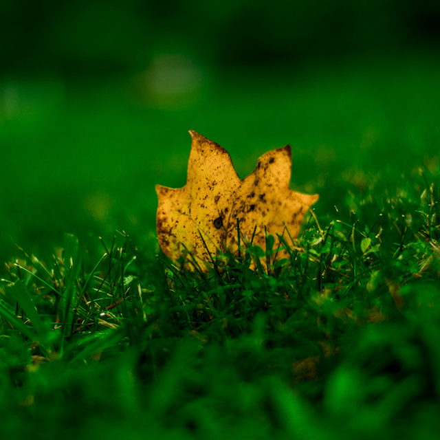 """Leaf in the Grass"" stock image"