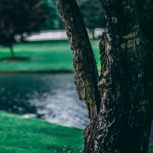 """Tree infront of Pond"" stock image"