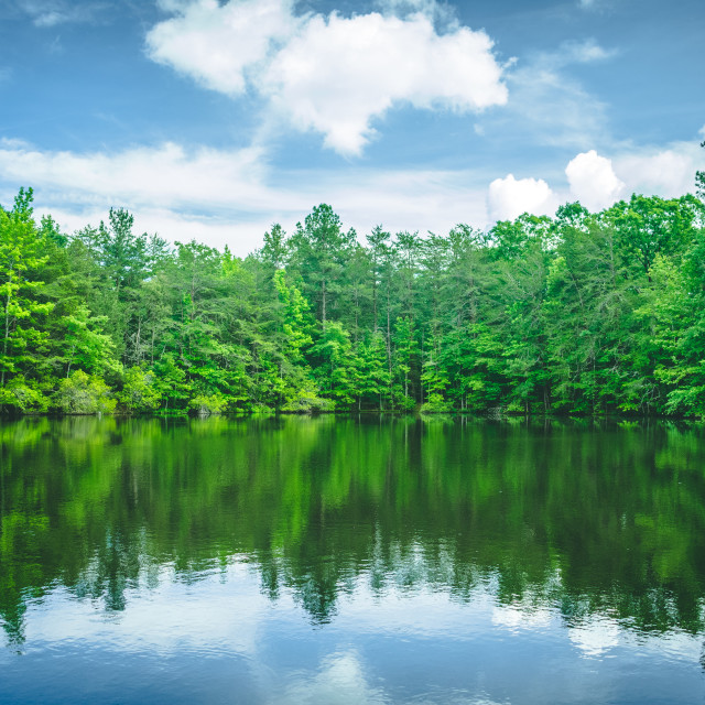 """Pond in the Middle of the Woods"" stock image"