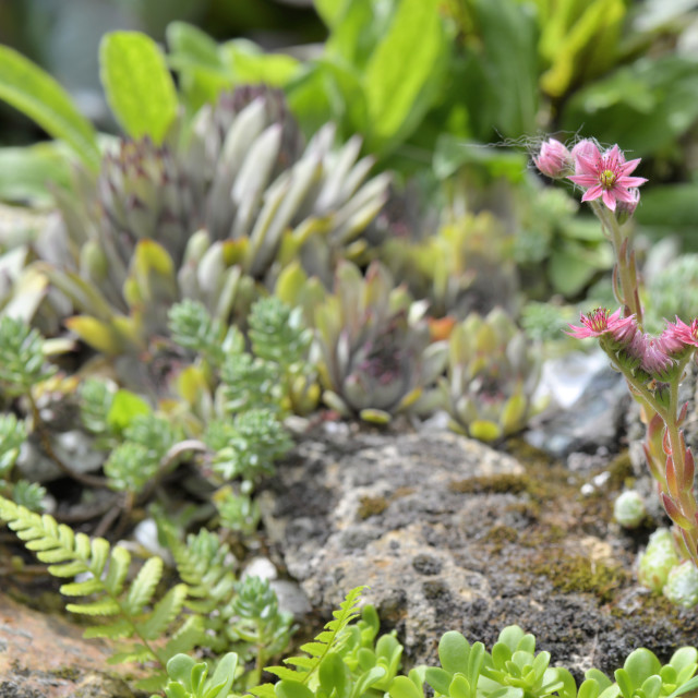 """""""succulent plant blooming"""" stock image"""