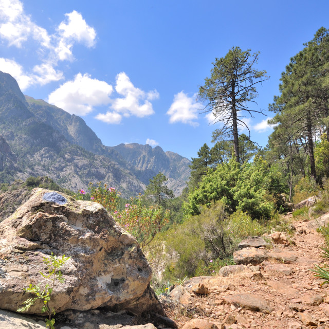 """""""footh path in mountain in Corsica"""" stock image"""