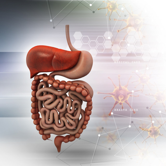 """""""Human digestive system with color background"""" stock image"""