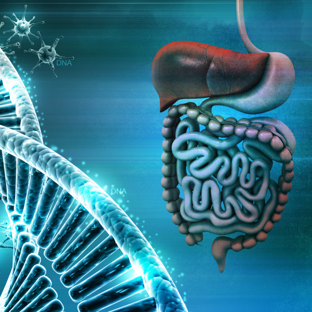 """""""Human digestive system with dna and virus in color background"""" stock image"""