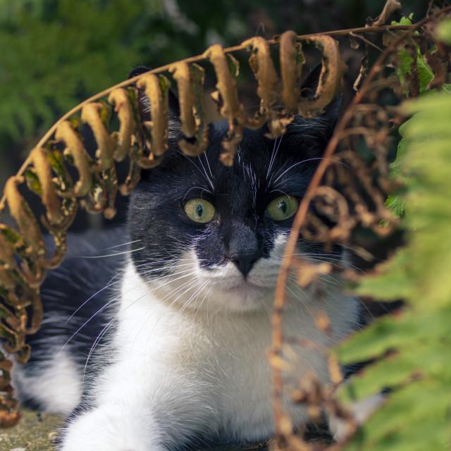 """Cat under fern."" stock image"
