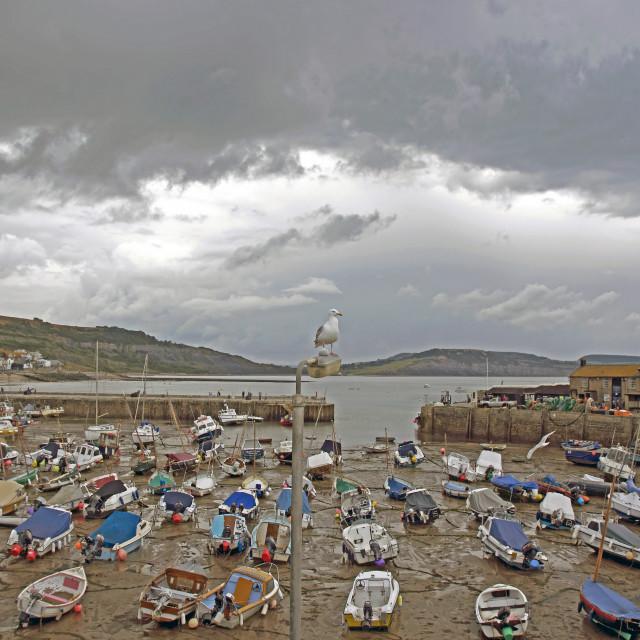 """Lyme Regis Seagull"" stock image"