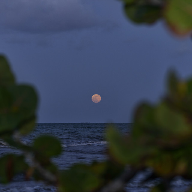 """Blood Moonrise Over Belize"" stock image"