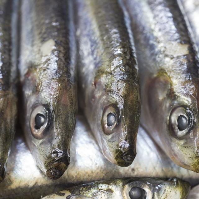 """Blue fish sardine"" stock image"