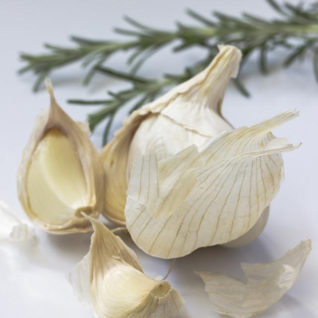 """Garlic with rosemary on white"" stock image"