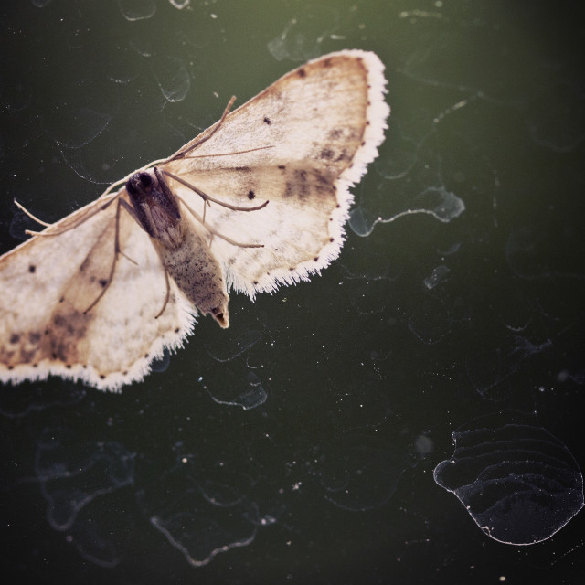 """""""Night butterfly on the window"""" stock image"""