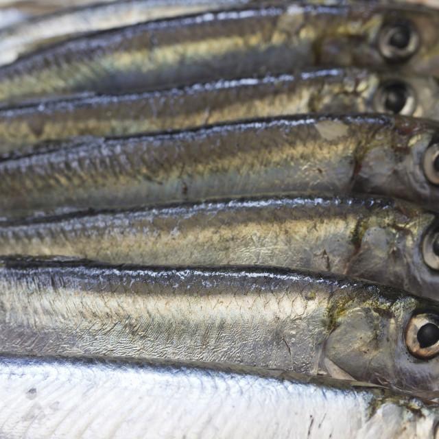 """""""Raw sardines"""" stock image"""
