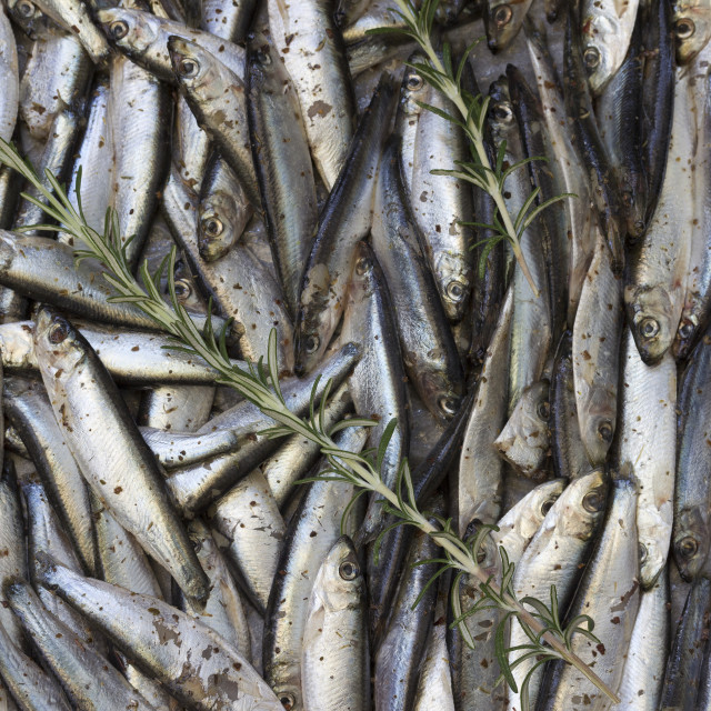 """Sardines ready for preparation"" stock image"