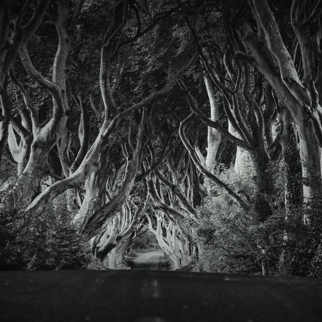 """The Dark Hedges"" stock image"