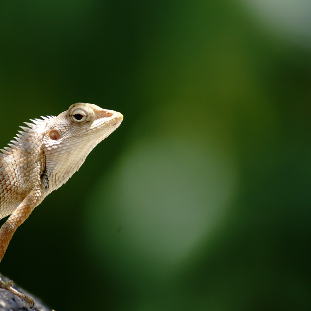 """Lizard on a perch"" stock image"