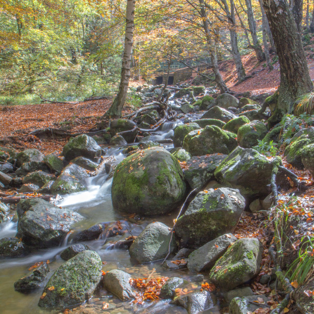 """Mountain Water Stream Autumn"" stock image"