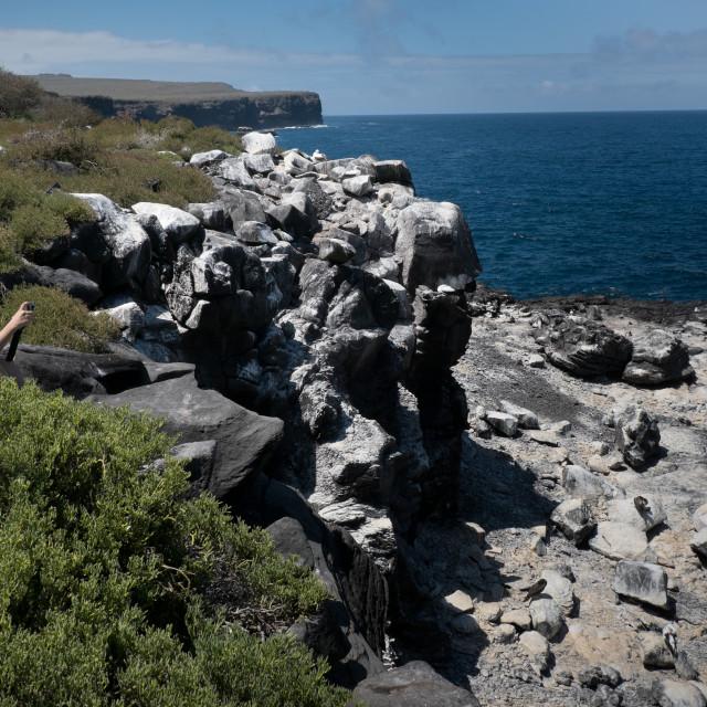 """Galapagos tourist photographs scenery/birds"" stock image"